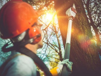 Tree Lopping Business - Business For Sale Brisbane  #3703